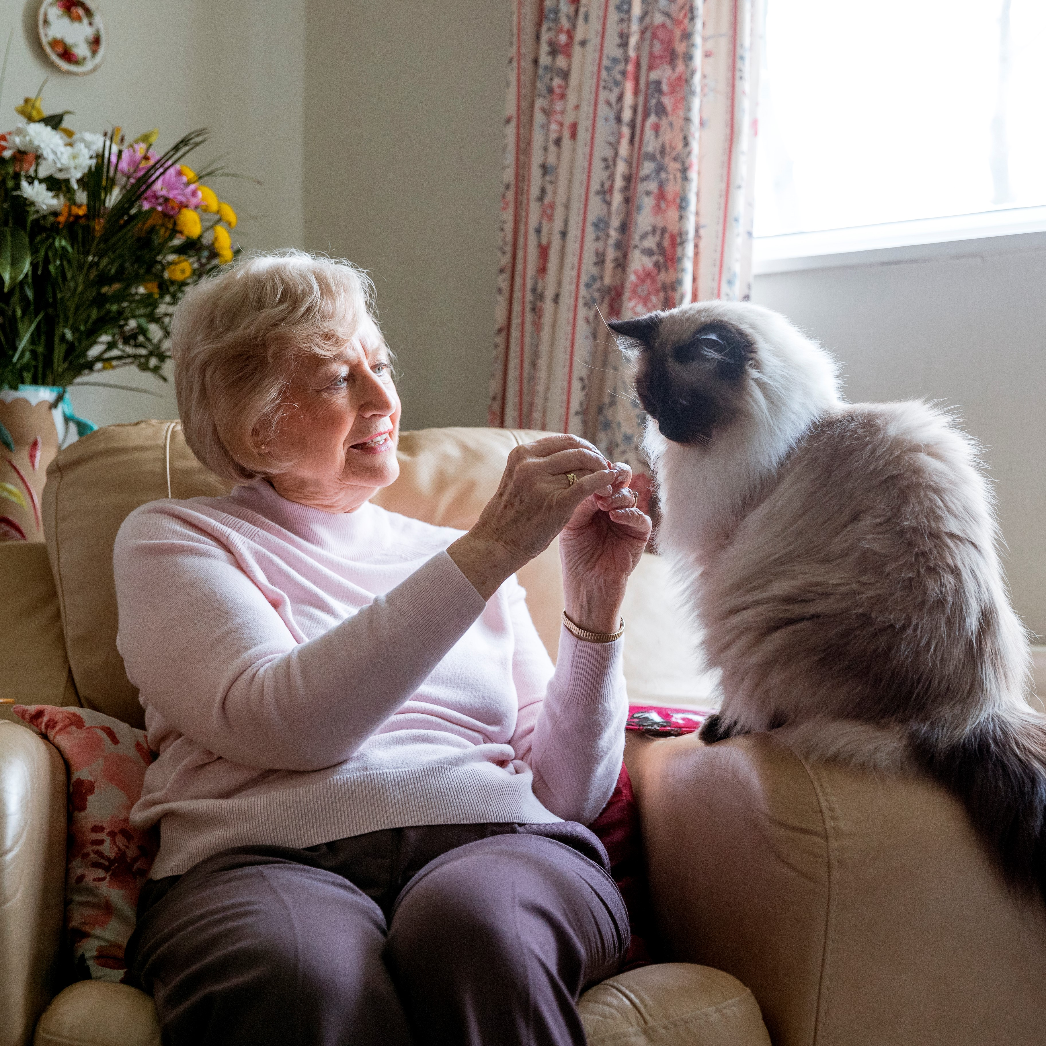 Senior woman sits in a chair next to a window and reaches toward her cat.